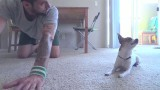 Yoga with Pancho